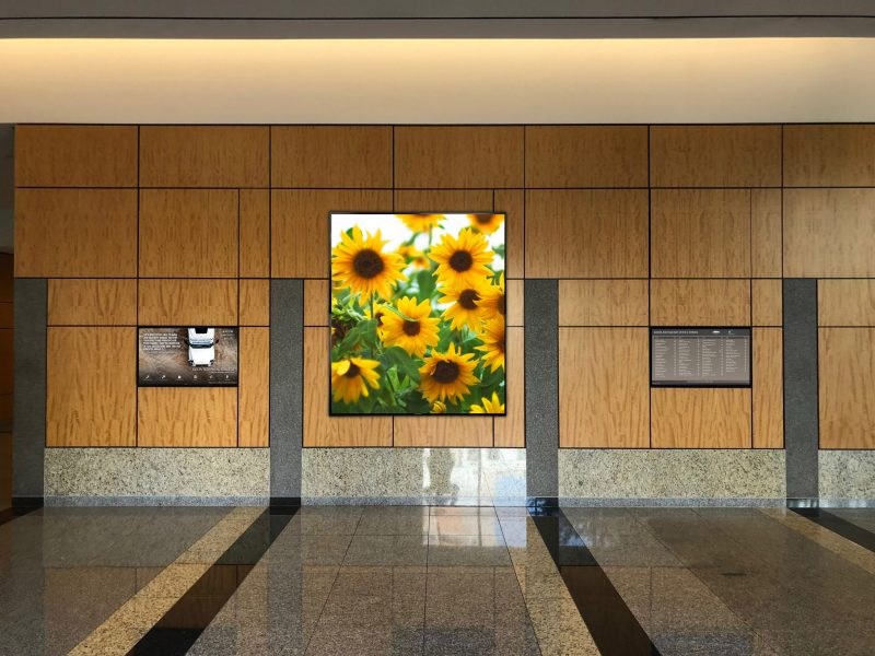 Two digital directories and video wall showing sunflowers on screen